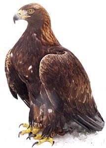 Stránka všeobecne o vtákoch a papagájoch